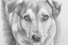 "March – ""For the Love of Dog"",  By Donna Newsom"